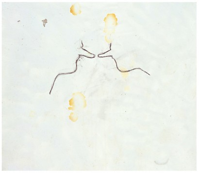 Coming and Licking, 1995, polyvinyl acetate, pigment, mixed media and graphite on paper 35 x 40,5 cm, Collection of the artist